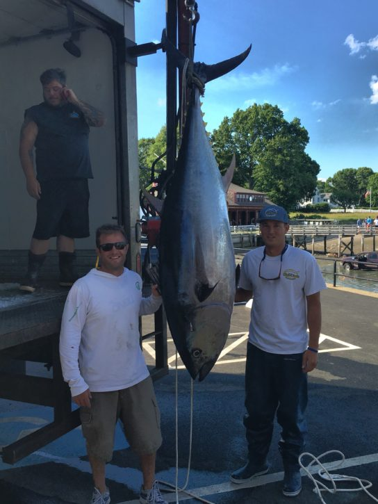 Giant Bluefin Tuna landed on High Hook out of Duxbury with Capt. Willie